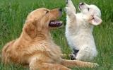 Hunde tilbehør