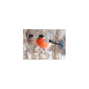 Vildtfugle tilbehør