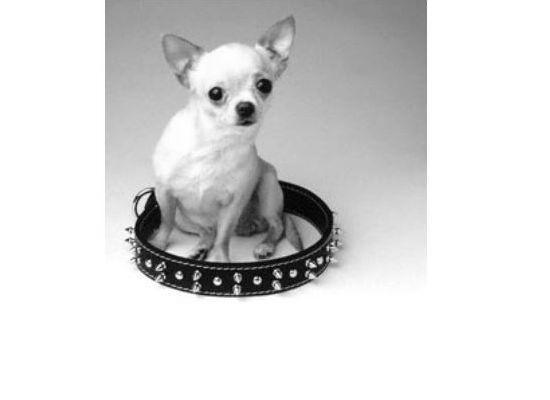 Hundehalsbånd, seler og liner