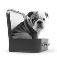Tasker, transportbure og sikkerhedsseler